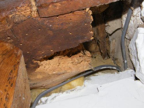 Beetle has eaten nearly all of this structural timber away at a house in Yarmouth