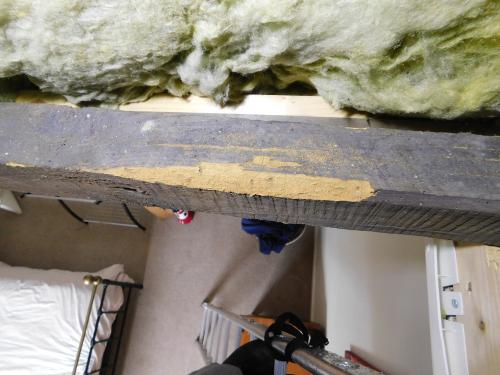 Woodworm eating away at roof timber